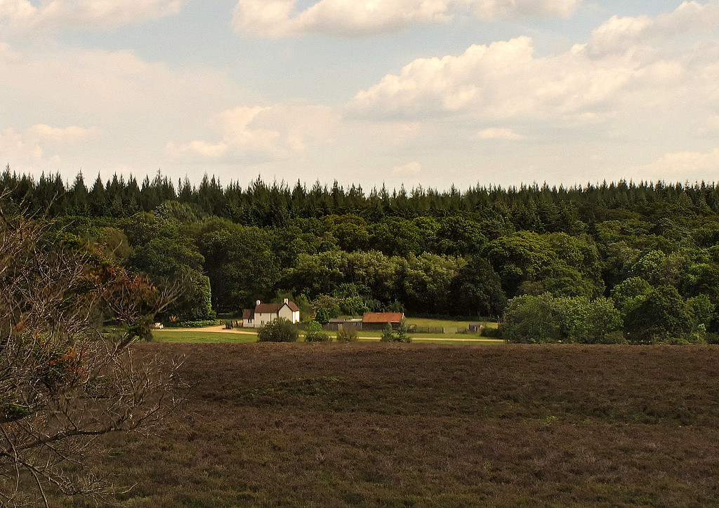 From Sloden Inclosure looking across to Holly Hatch Cottage.