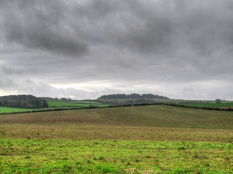 A distant view of Badbury Rings, a local iron age hill fort.
