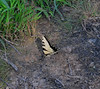 This butterfly land at my feet and let me take it's picture!