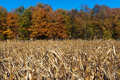 1  RobertEvans com Door County Wisconsin Corn Field _DSC4845