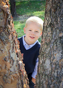 cale in tree-1