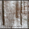 Winter Trees Through Lace #1