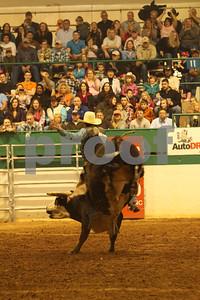 Bull Sat 2 (83)