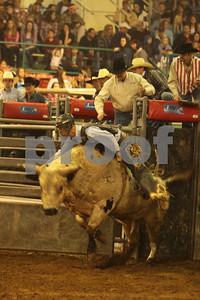 Bull Sat 2 (41)