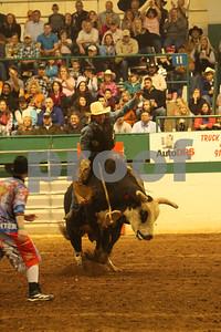 Bull Sat 2 (87)