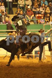 Bull Sat 2 (56)