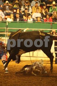 Bull Sat 2 (65)