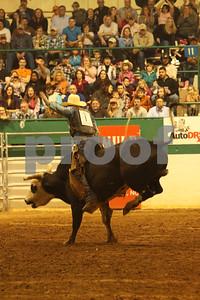 Bull Sat 2 (84)