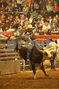 Bull Sat 2 (73)
