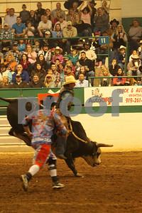 Bull Sat 2 (88)