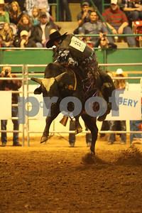 Bull Sat 2 (57)