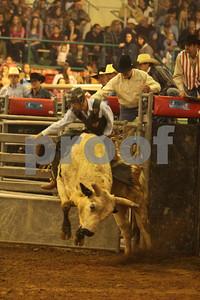 Bull Sat 2 (42)