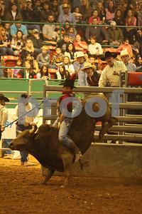 Bull Sat 2 (47)