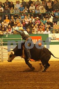 Bull Sat 2 (85)