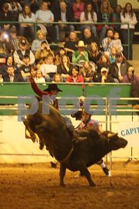 Bull Sat 2 (50)