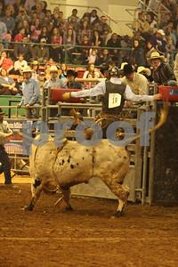 Bull Sat 2 (45)