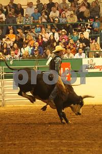 Bull Sat 2 (82)