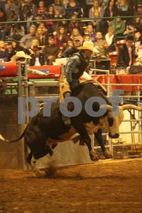 Bull Sat 2 (71)