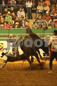 Bull Sat 2 (61)