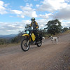 Exploring Bisbee mountain roads with local dogs in tow.