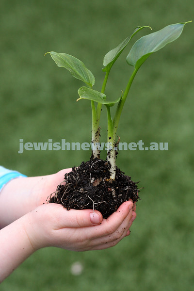 4/9/09. seedling in young hands. rosh hashanha. plant. photo: peter haskin