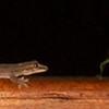 ANIMALS - Costa Rica :