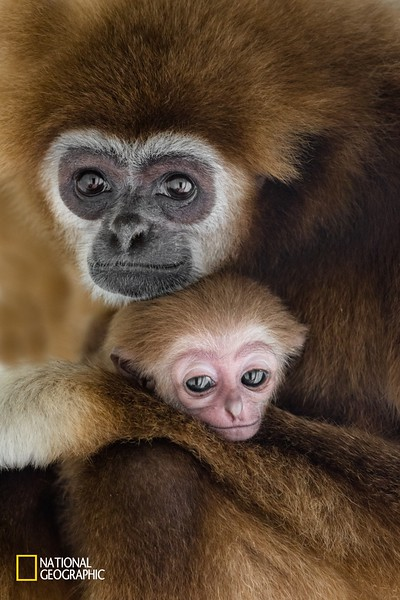 -NATIONAL GEOGRAPHIC - Top photo of the week.  NATIONAL GEOGRAPHIC - EDITOR S FAVORIT and EDITOR S NOTE