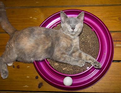 Abandoned Kitten: Tom