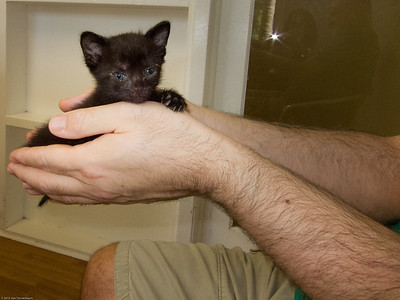 A handfull of Kitten; between three and four weeks old