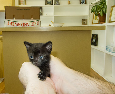 At the vet ~4 weeks old, eye and respiratory infections