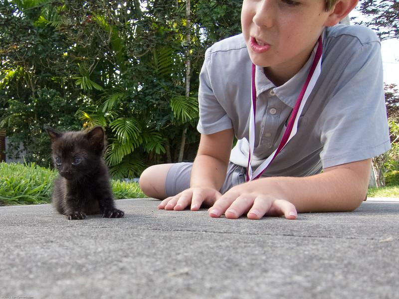 Kids love cats