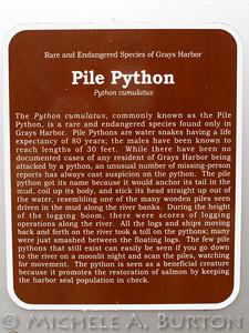 Pile Python