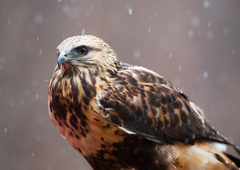 World bird sanctuary on a snowy day