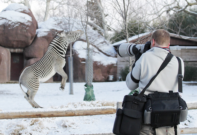Getting the zebra to pose for the 300mm 2.8. Capured by my beautiful wife Neringa
