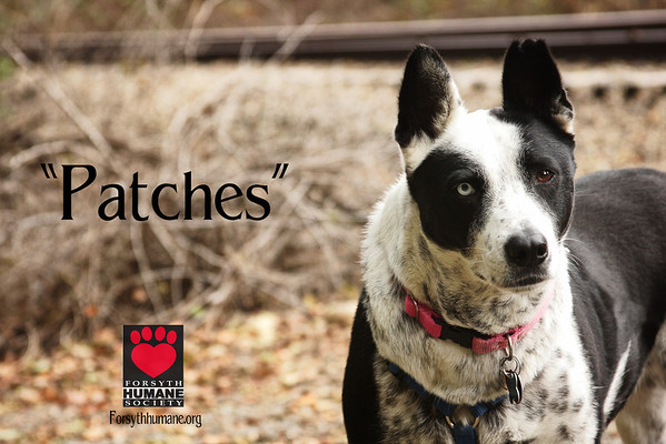 Some of my Photos for  the Forsyth Humane Society
