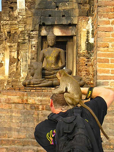 This little guy wasn't happy that I would not give him my Sunglasses or anymore yogurt. This was my first big trip with my camera and it was to Thailand! In Lop Buri there are some temple ruins in the center of the city that migratory monkey's happen to be inhabiting. Seeing them take over a temple site was pretty awesome and being able to go up and play with them was even more wild. It is times like that, that I am glad I bought my camera and started recording the amazing places I got to go.