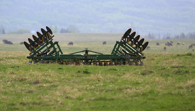 Cattle and farm equipment are typical landscape elements in this part of the world.