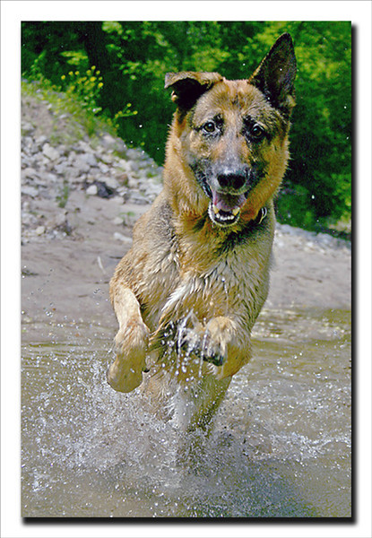 My best friend and hiking partner Kane.<br /> R.I.P<br /> April-1997 to February -2010  <br /> You will be missed forever