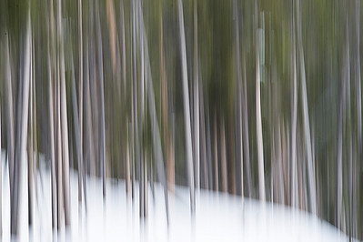 Abstract Forest #2