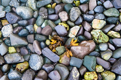 Seaweed and Rock Collage
