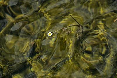 Pond Bloom