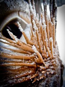 rim icicles-7