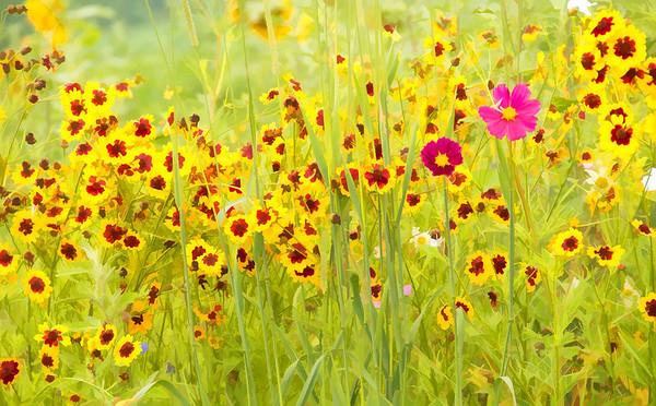 Floral Impression No.2