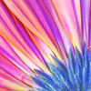 Gerber Daisy Abstract No.2