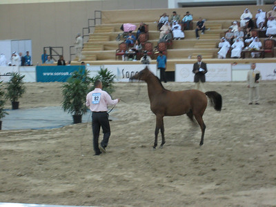 One the yearlings in the ring