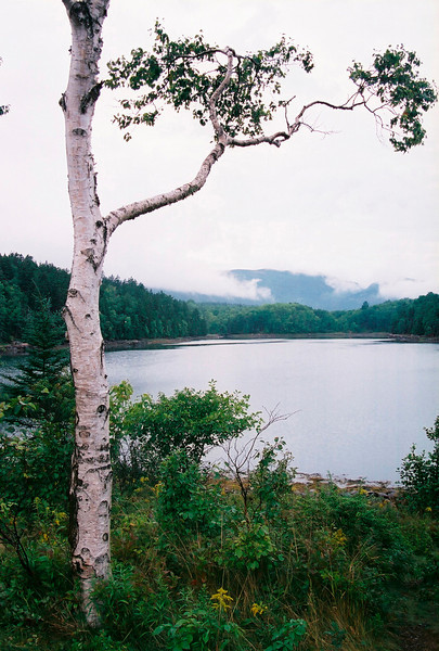 Acadian Dreams