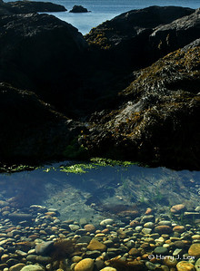 Tide pool at Acadia's Hunter's Cove. A difficult photo to achieve due to the wide range of light.