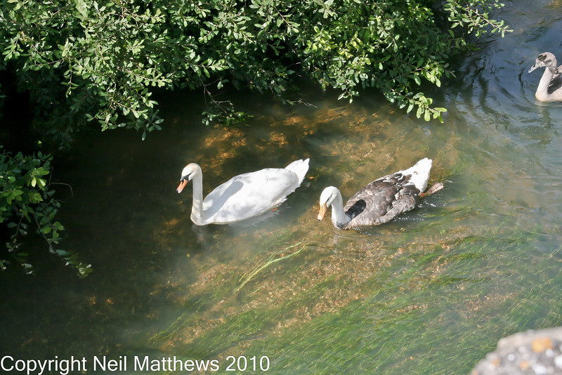 01 Sep 2010 - River Frome - Images kindly donated by Neil Matthews. Copyright Neil Matthews 2010