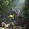 Jungle trekking, Tabin, Sabah, Borneo