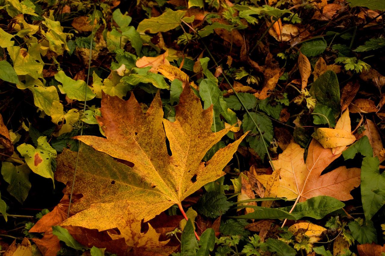 Fall leaves.